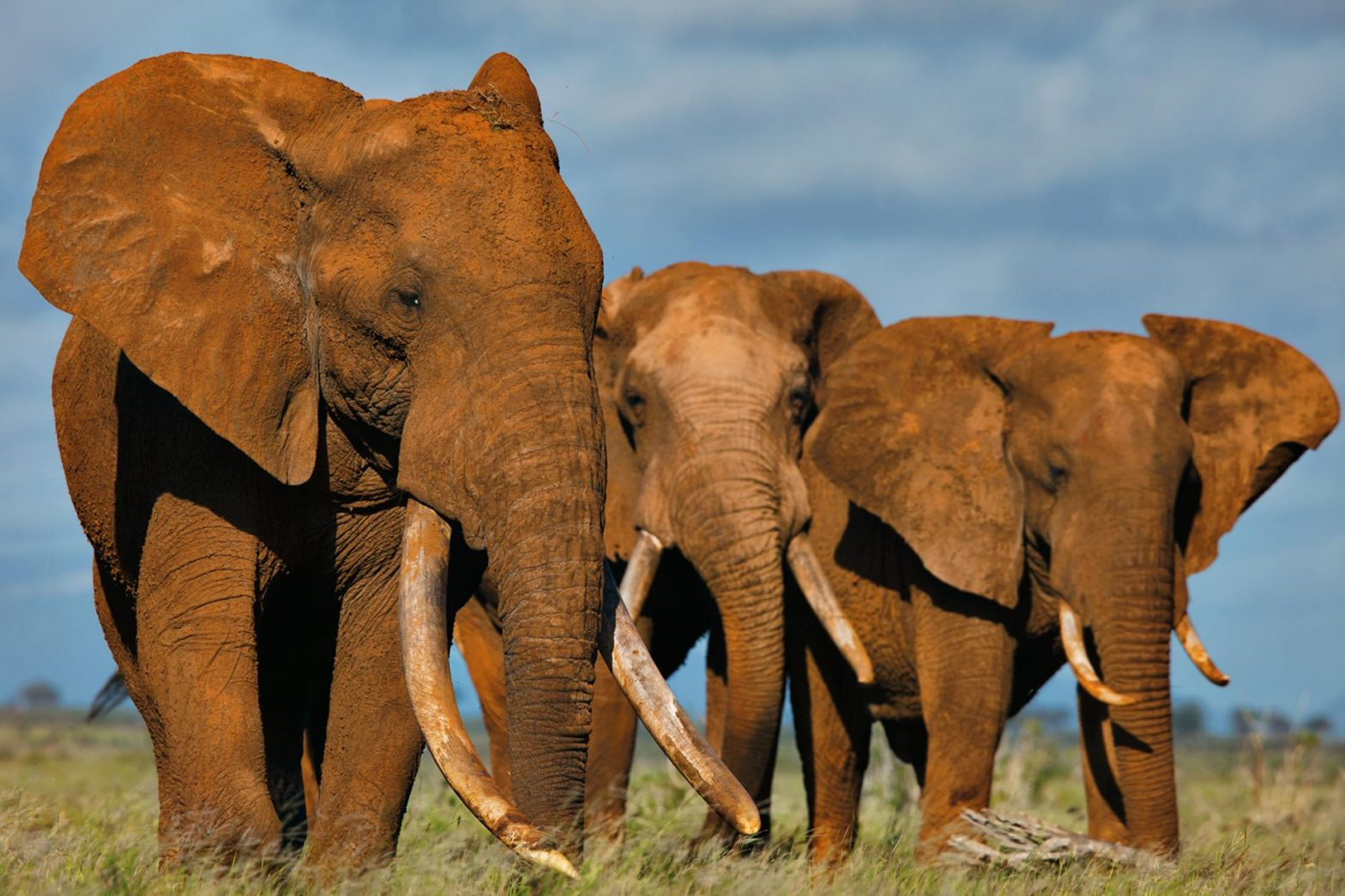 Southern African nations: Ask for permission to sell ivory, elephants.