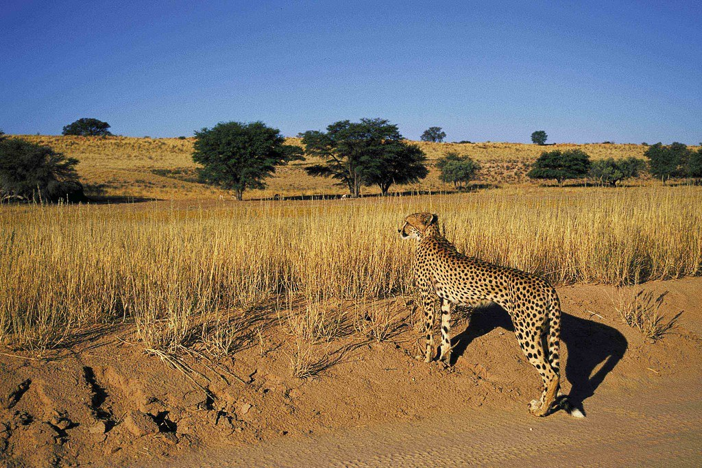 Places to Visit in Africa big cat