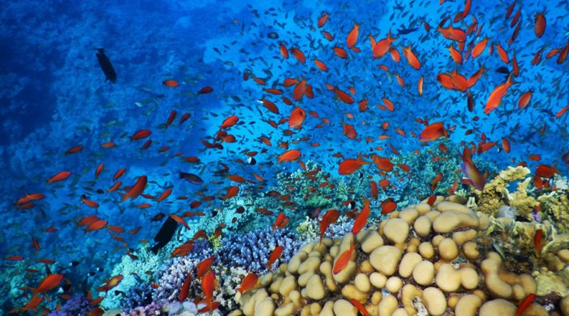 Coral-reef-Red-Sea-Hurghada-Egypt-spec2-800x445-1