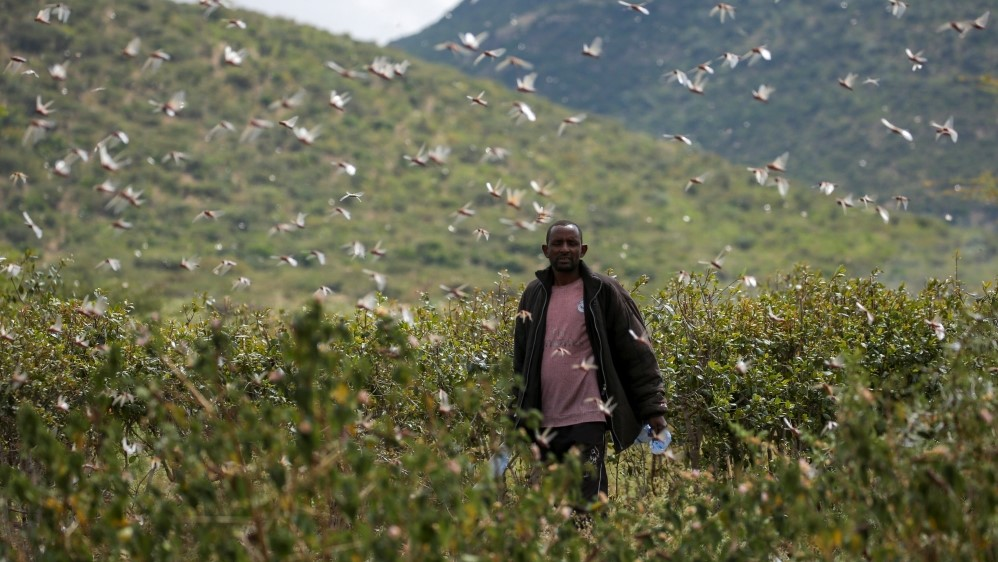 A farmer in Ethiopia, attempts to fend off desert locusts as they fly in his khat farm on the outskirts of Jijiga in the Somali region,