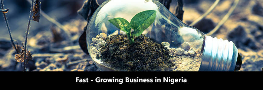Fast-growing business in Nigeria - The light bulb is on the ground. There is a little bit of soil inside the light bulb, from which is growing the plant.