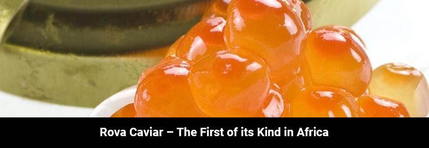 Rova Caviar postpones Spring Harvest