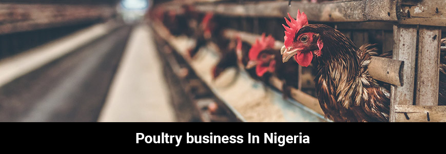 Some chickens in a brown wooden coop for the poultry business in Nigeria