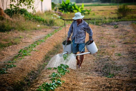 a farmer is watering plants on his own farm