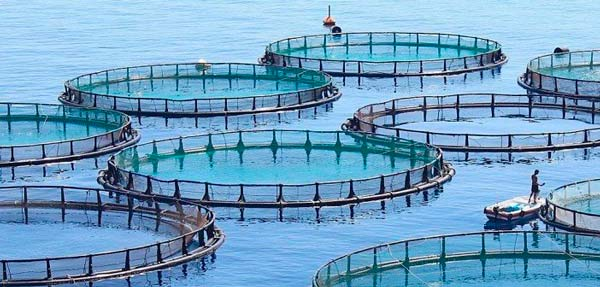 some fishes nets for a fish farming