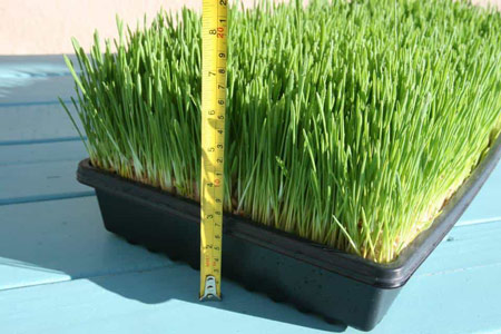 some growing grass
