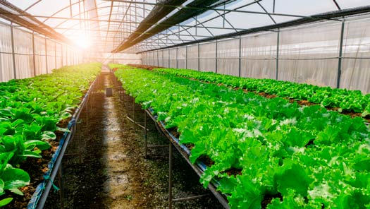 organic farming with a lot of plants as a good agriculture business idea